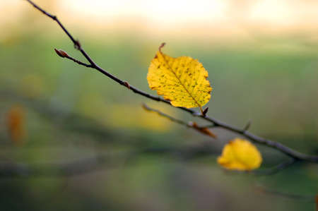 Last autumn leaves in forest Stock Photo - 1126867