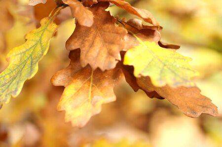 Autumn leaves on tree. Autumn, fall background Stock Photo - 1126870