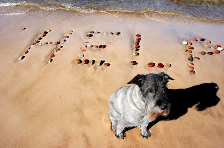 famine: Word HELP on beach sand, made from rocks and dog sitting