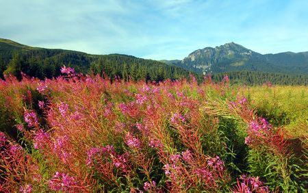 Tatra Mountains landscape, in the valley Stock Photo