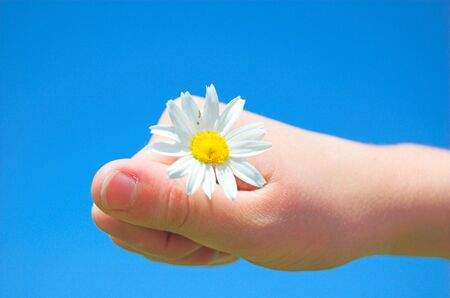 Spring flower in childs hand photo