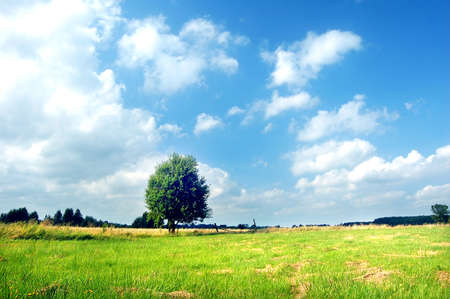 Spring landscape. Green meadow with tree Stock Photo - 1850384