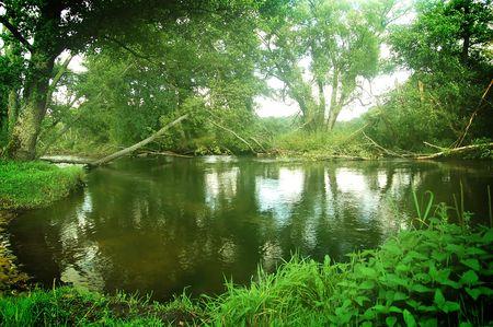lussureggiante: All'interno profonda lussureggiante foresta. Una fonte di erbe mediche