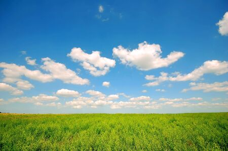 Fresh green corn field on bright blue sunny sky background Stock Photo - 1895408