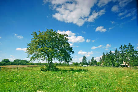 Rural scene with tree and fence Stock Photo - 1895414