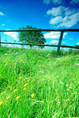 Rural scene with tree and fence Stock Photo - 1895423