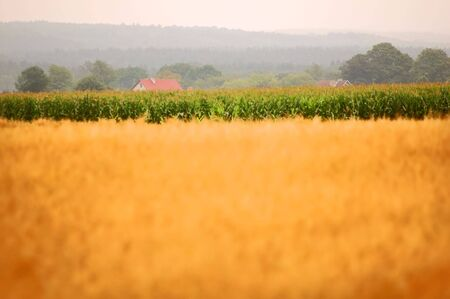 Rural background. Blurred field for you advert and sharp second plan Stock Photo - 2014201