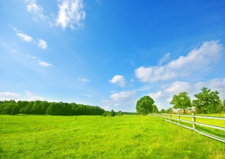 Summer bright landscape, blue sky and green fresh grass