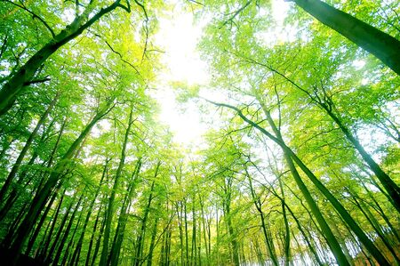 green forest. bright, natural colours photo