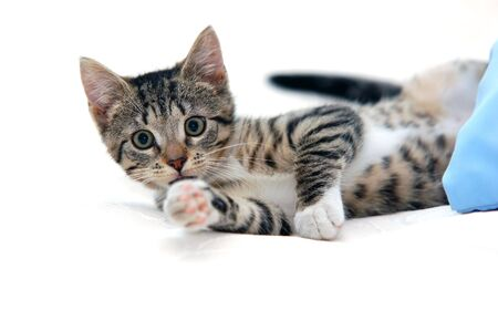 attention grabbing: Little funny kitten. Isolated on white
