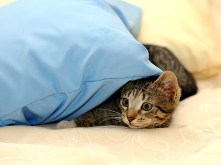 attention grabbing: Little funny kitten. playing on bed Stock Photo
