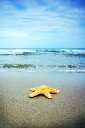 Starfish on the tropical beach Stock Photo - 3229391