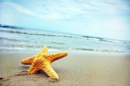 Starfish on the tropical beach Stock Photo