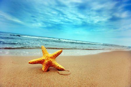 stella marina: Starfish sulla spiaggia tropicale Archivio Fotografico