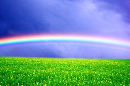 Field of green grass over rainbow sky