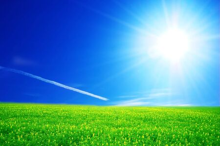 Field of green grass over blue sunny sky Stock Photo - 3259302