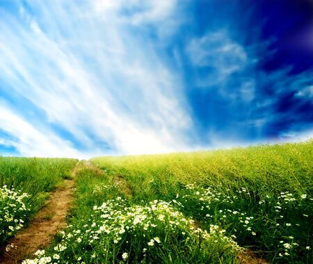 clear path: Fields of green grass over blue sunny sky Stock Photo