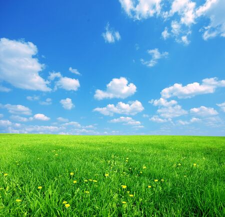 Green grass and blue sunny sky spring landscape. Perfect for backgrounds Stock Photo - 4415882