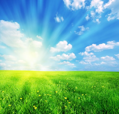 free background: Green grass and blue sunny sky spring landscape. Perfect for backgrounds Stock Photo