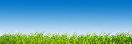 Green fresh grass on blue sky panorama. Ready to use! Stock Photo - 4415869