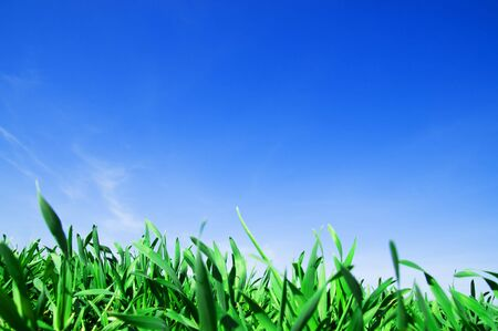 Green fresh grass and beautiful blue sky Stock Photo - 5358382