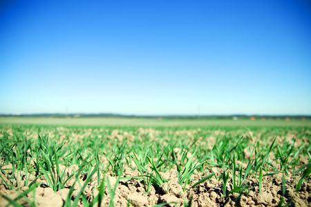 Plain field lanscape of agricultural fertile ground Stock Photo - 5358463