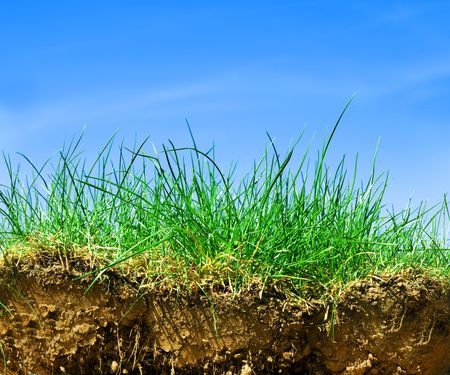 Ground, grass, sky. Cross section of three elements of nature. photo