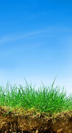 Ground, grass, sky. Cross section of three elements of nature. Vertical Stock Photo - 5358471