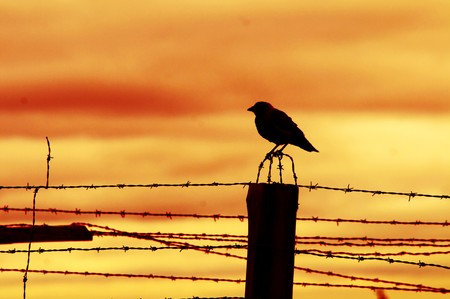 Bird sitting on prison fence at sunset. photo