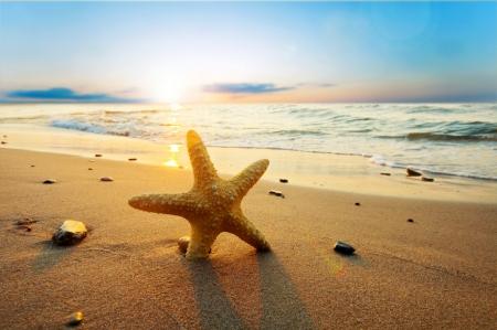 etoile de mer: �toiles de mer sur la plage. L'heure d'�t� Banque d'images