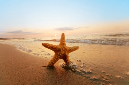 summer time: Starfish on the beach. Summer time