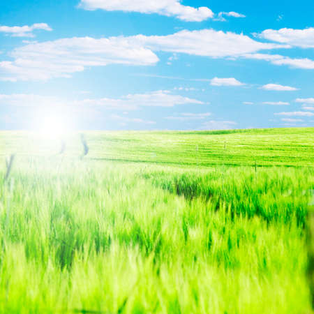 Summer landscape. Green field and blue sky Stock Photo - 8105728