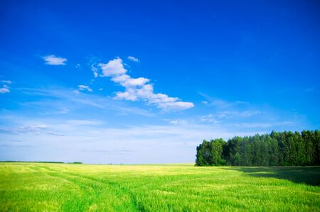 Summer landscape. Green field, trees and blue sky Stock Photo - 8105773