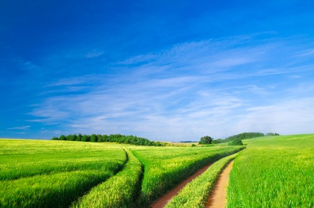 Summer landscape. Green field, trees and blue sky photo