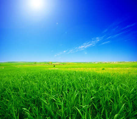 Rural summer landscape. Green meadow and clear blue sky Stock Photo - 8105768