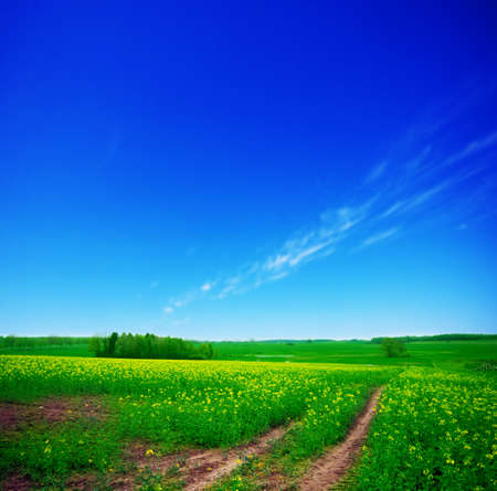Rural summer landscape. Green meadow and clear blue sky Stock Photo - 8105765