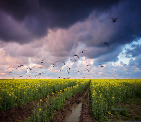 Stormy summer landscape. Green field and beautiful sky Stock Photo - 8105754