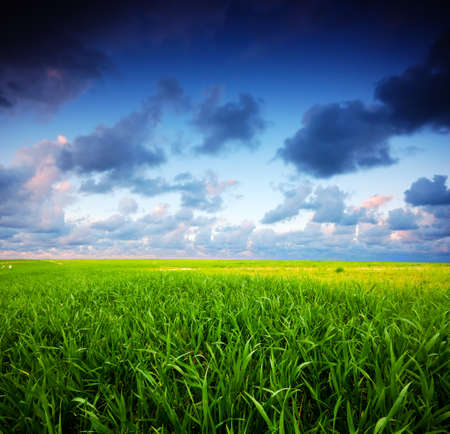 Stormy summer landscape. Green field and beautiful sky Stock Photo - 8105769