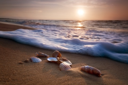 Waves approaching sea shells lying on sand during sunset photo