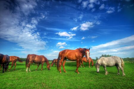 brown horse: Beautiful wild horses on the perfect field.