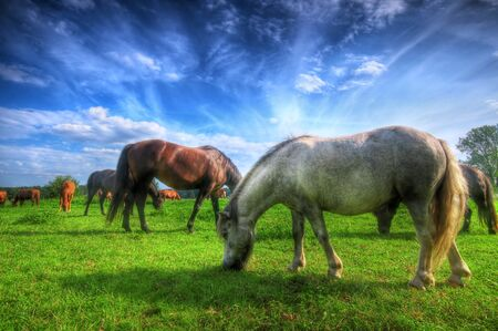 Beautiful wild horses on the perfect field. Stock Photo