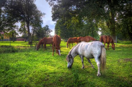 beautiful horse: Beautiful wild horses on the perfect field.
