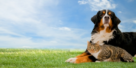 dog background: Dog and cat together on grass, sunny spring day and blue sky. Panorama version