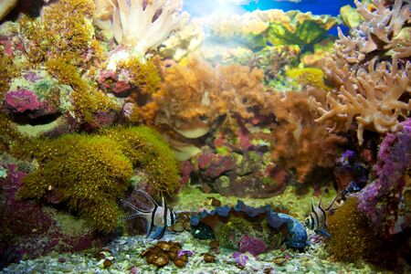 soft coral: Underwater life. Coral reef, fish, colorful plants in ocean