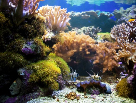 coral ocean: Underwater life. Coral reef, fish, colorful plants in ocean