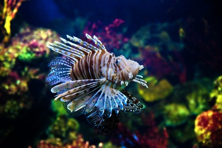 Underwater view in aquarium. Fish, coral reef photo