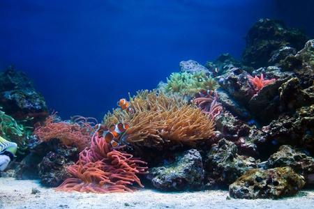 Underwater life, Fish, coral reef in ocean photo