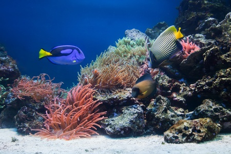 Underwater life, Fish, coral reef in ocean photo