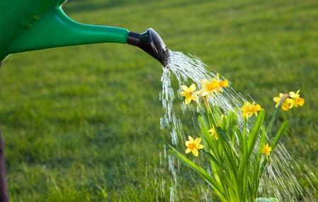 regando plantas: Riego las flores en el jard�n