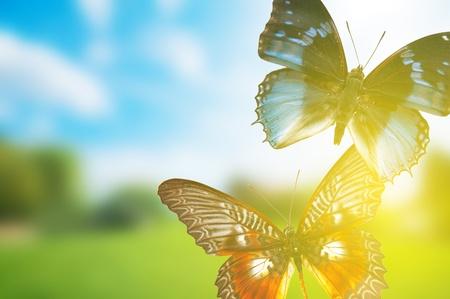 Schmetterling Frühling Feld. Eine Gruppe o bunte Schmetterlinge im Frühling Sommer Gras Land Standard-Bild - 11696773